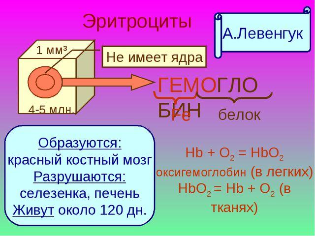 Эритроциты ГЕМОГЛОБИН Fe белок Образуются: красный костный мозг Разрушаются:...