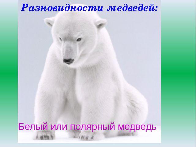 Белый или полярный медведь Разновидности медведей: