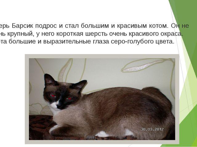 Теперь Барсик подрос и стал большим и красивым котом. Он не очень крупный, у...