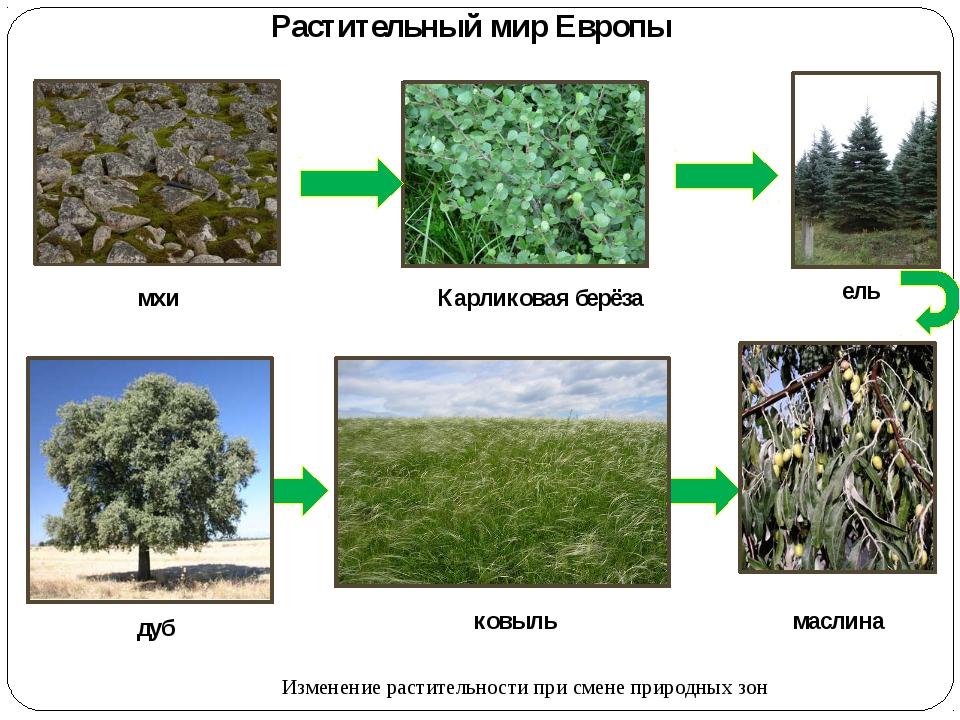подкинули растения евразии фото с названиями люди