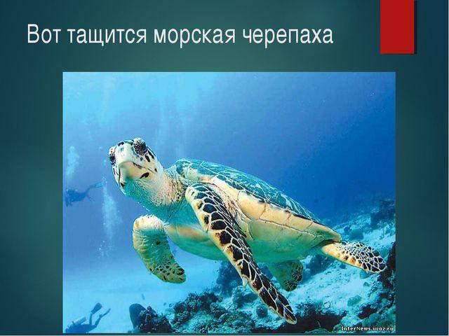 Вот тащится морская черепаха