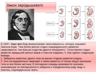 Закон зародышевого сходства В 1828 г. Карл фон Бэр формулировал закономерност