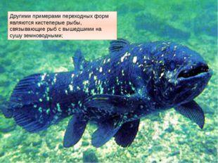 Другими примерами переходных форм являются кистеперые рыбы, связывающие рыб с