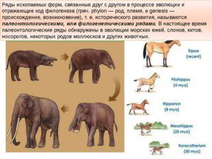Ряды ископаемых форм, связанные друг с другом в процессе эволюции и отражающи