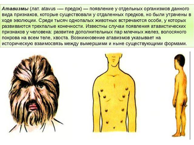 Атавизмы (лат. atavus -— предок) — появление у отдельных организмов данного в...