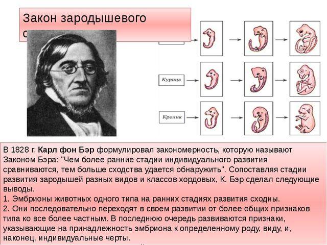 Закон зародышевого сходства В 1828 г. Карл фон Бэр формулировал закономерност...