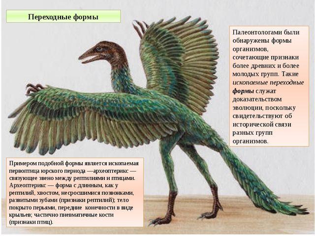 Палеонтологами были обнаружены формы организмов, сочетающие признаки более др...