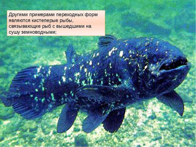 Другими примерами переходных форм являются кистеперые рыбы, связывающие рыб с...