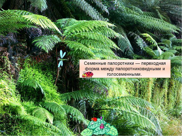 Семенные папоротники — переходная форма между папоротниковидными и голосеменн...