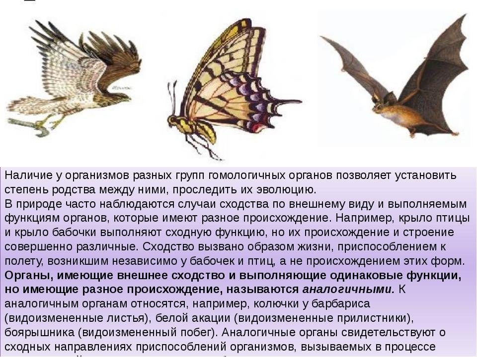Наличие у организмов разных групп гомологичных органов позволяет установить с...