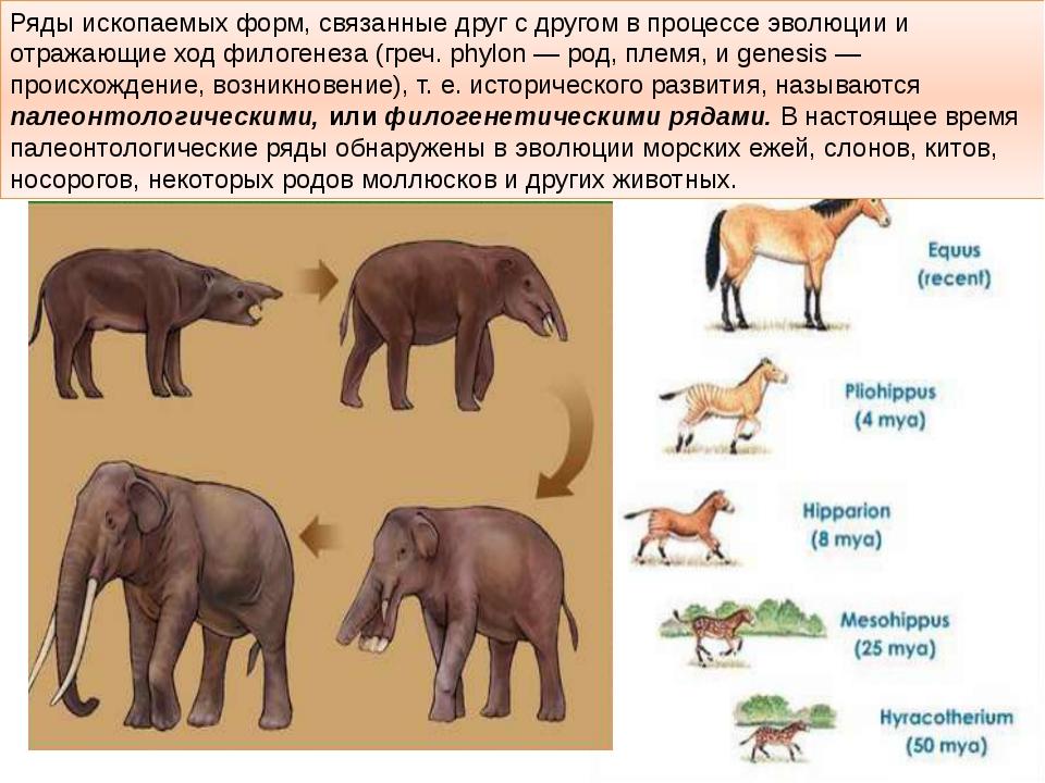 Ряды ископаемых форм, связанные друг с другом в процессе эволюции и отражающи...