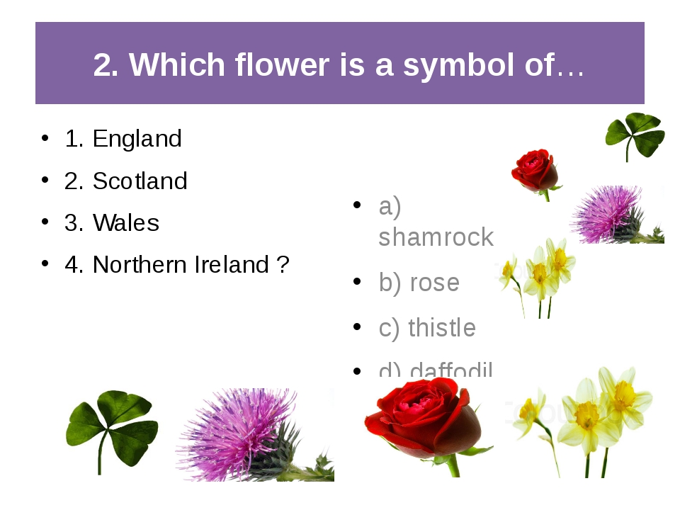 2. Which flower is a symbol of… 1. England 2. Scotland 3. Wales 4. Northern I...