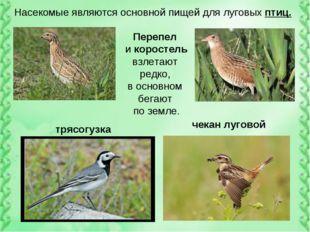 Насекомые являются основной пищей для луговых птиц. Перепел и коростель взлет