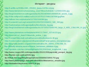 Интернет - ресурсы http://i.artfile.ru/2048x1365_295093_[www.ArtFile.ru].jpg