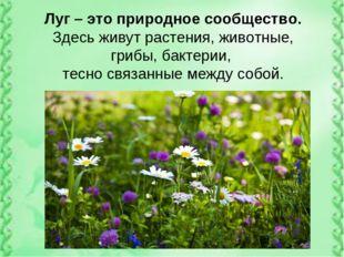 Луг – это природное сообщество. Здесь живут растения, животные, грибы, бактер