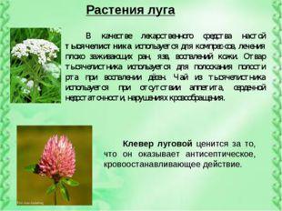 Растения луга В качестве лекарственного средства настой тысячелистника исполь
