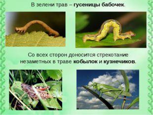 В зелени трав – гусеницы бабочек. Со всех сторон доносится стрекотание незаме