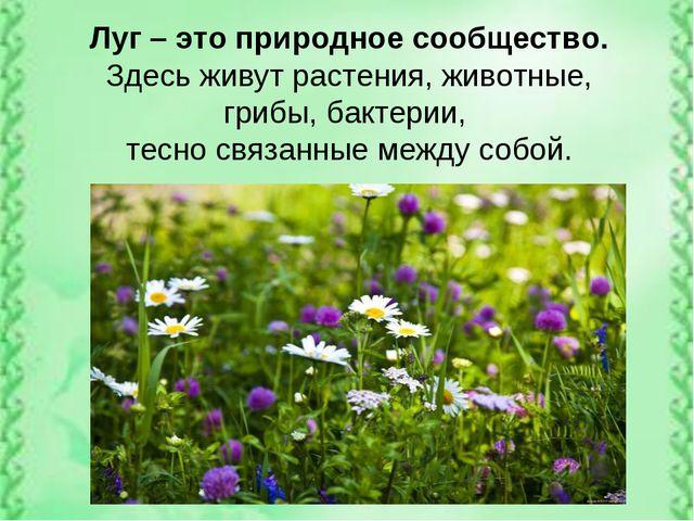 Луг – это природное сообщество. Здесь живут растения, животные, грибы, бактер...