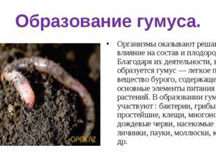 Образование гумуса. Организмы оказывают решающее влияние на состав и плодород
