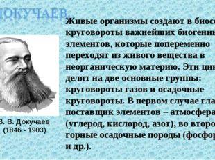 В. В. Докучаев (1846 - 1903) Живые организмы создают в биосфере круговороты в