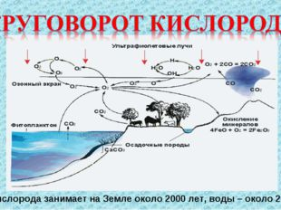 Цикл кислорода занимает на Земле около 2000 лет, воды– около 2 млн лет