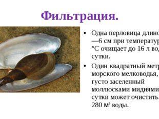 Фильтрация. Одна перловица длиной 5—6 см при температуре 20 °С очищает до 16