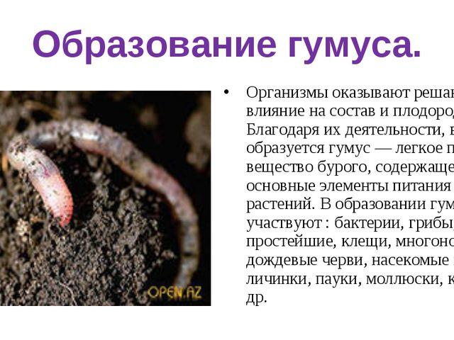 Образование гумуса. Организмы оказывают решающее влияние на состав и плодород...