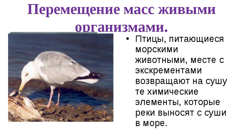 Перемещение масс живыми организмами. Птицы, питающиеся морскими животными, ме...