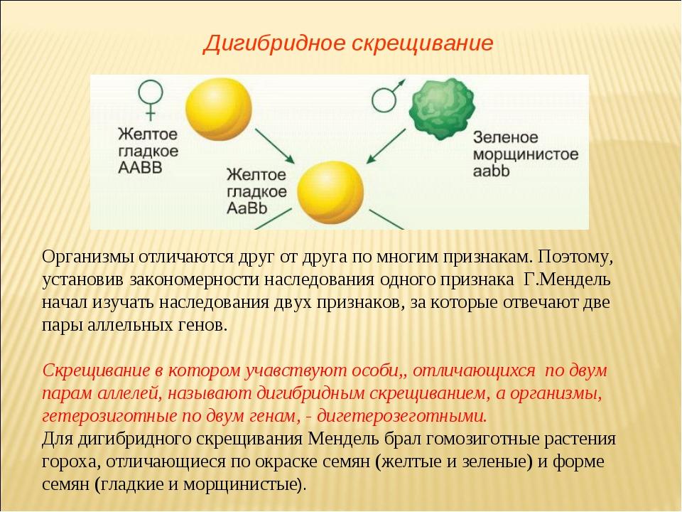 Дигибридное скрещивание Организмы отличаются друг от друга по многим признака...