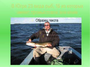 В Югре 23 вида рыб, 18 из которых имеют промысловое значение