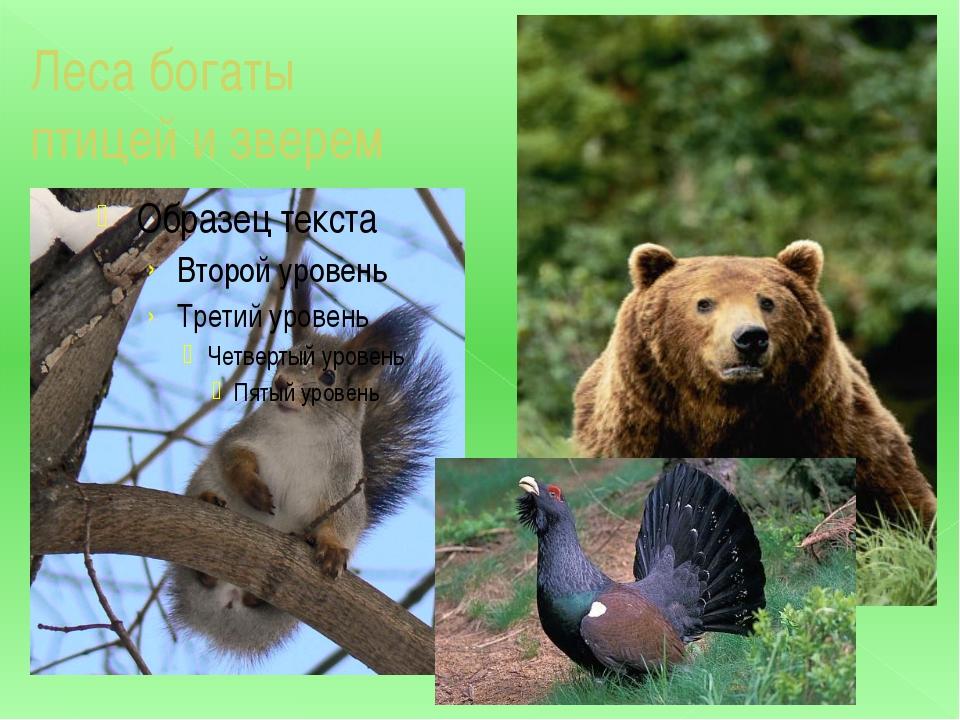 Леса богаты птицей и зверем