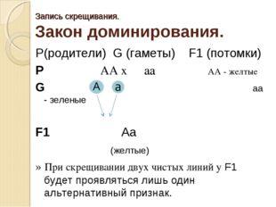 Запись скрещивания. Закон доминирования. P(родители) G (гаметы) F1 (потомки)