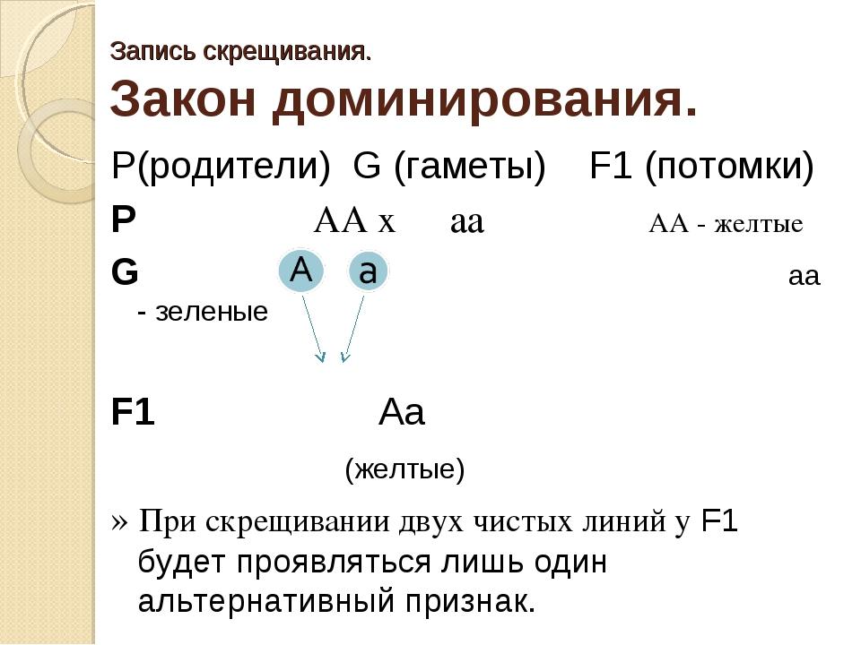 Запись скрещивания. Закон доминирования. P(родители) G (гаметы) F1 (потомки)...