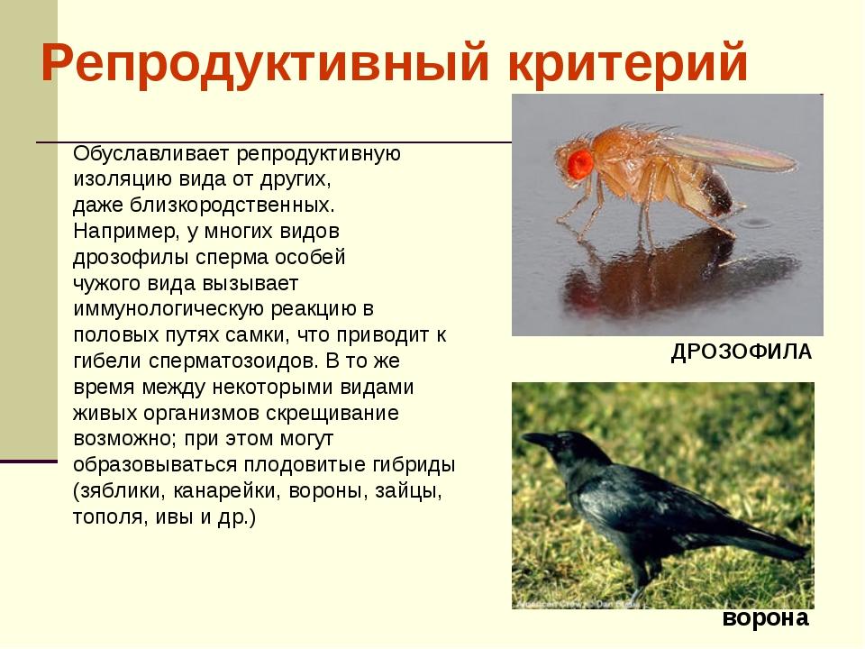 Обуславливает репродуктивную изоляцию вида от других, даже близкородственных...