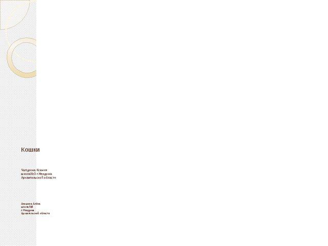 Кошки Чапурина Ксения школа№3 г.Няндома Архангельской области Акишина Алёна ш...