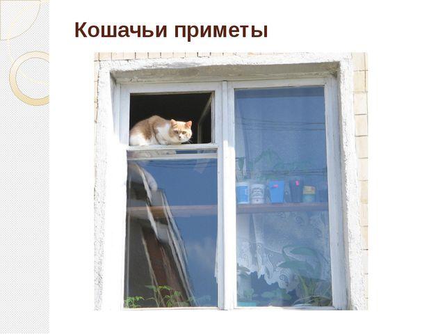 Кошачьи приметы