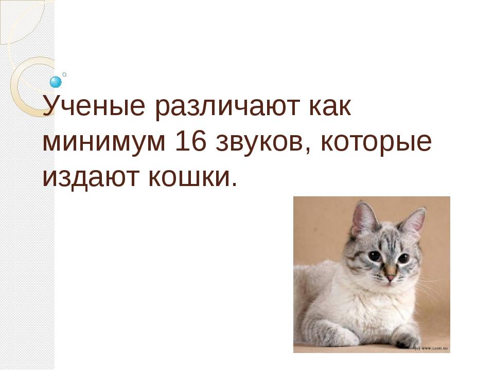 Ученые различают как минимум 16 звуков, которые издают кошки.