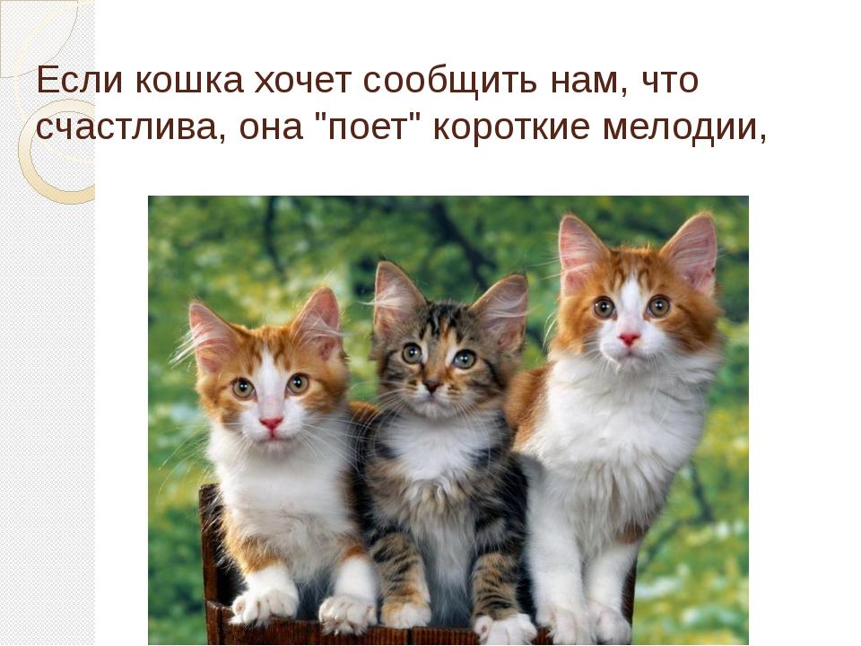 """Если кошка хочет сообщить нам, что счастлива, она """"поет"""" короткие мелодии,"""
