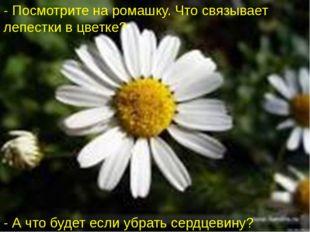 - Посмотрите на ромашку. Что связывает лепестки в цветке? - А что будет если