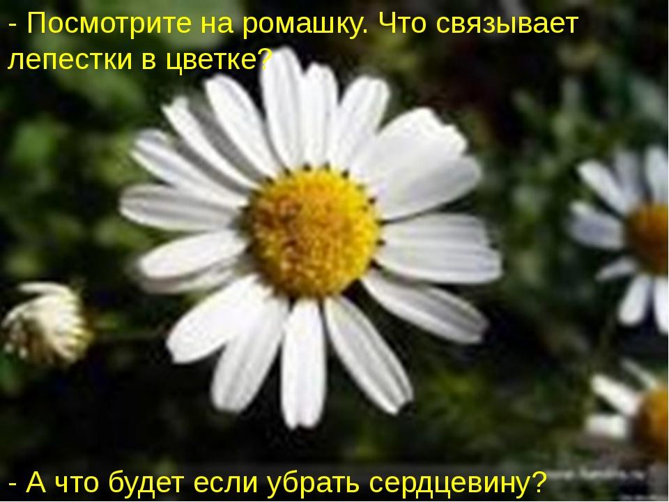 - Посмотрите на ромашку. Что связывает лепестки в цветке? - А что будет если...