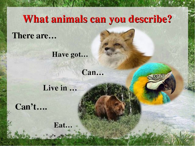 What animals can you describe? There are… Have got… Can… Live in … Can't…. Ea...