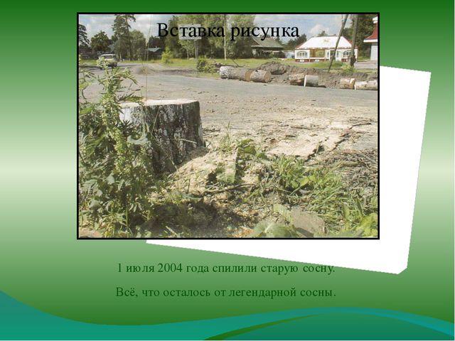 1 июля 2004 года спилили старую сосну. Всё, что осталось от легендарной сосны.