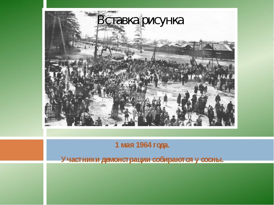 1 мая 1964 года. Участники демонстрации собираются у сосны.