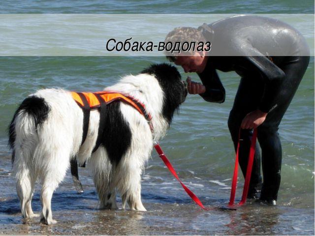 Собака-водолаз