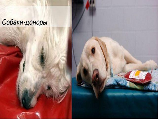 Собаки-доноры