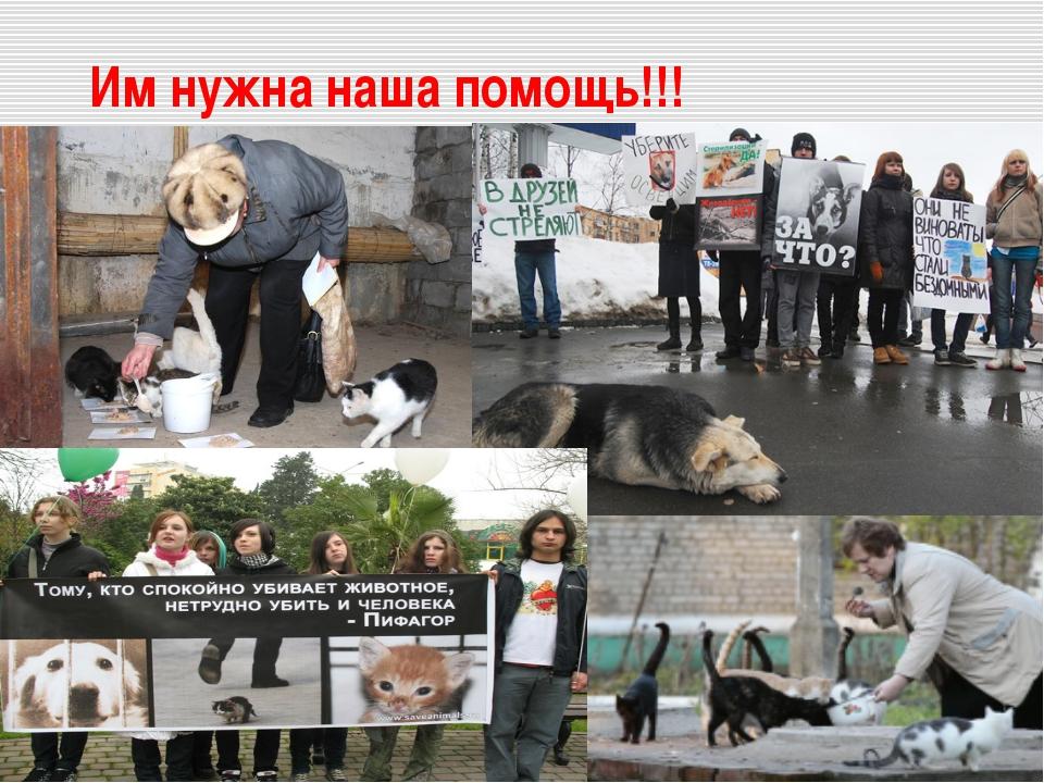 Им нужна наша помощь!!!
