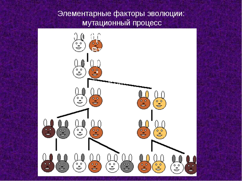 Элементарные факторы эволюции: мутационный процесс