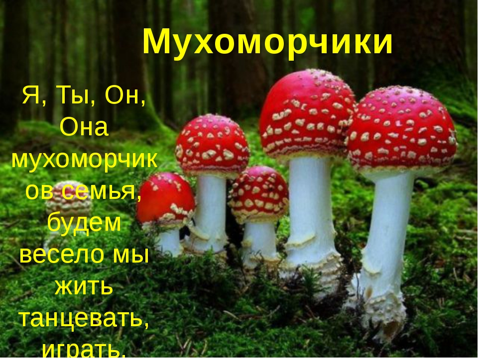 Мухоморчики Я, Ты, Он, Она мухоморчиков семья, будем весело мы жить танцеват...