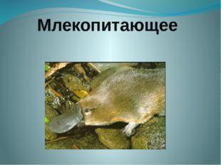 Млекопитающее