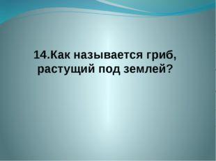 14.Как называется гриб, растущий под землей?